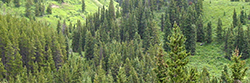 Canadian Institute of Forestry eLectures: A series of lectures on Forest History.
