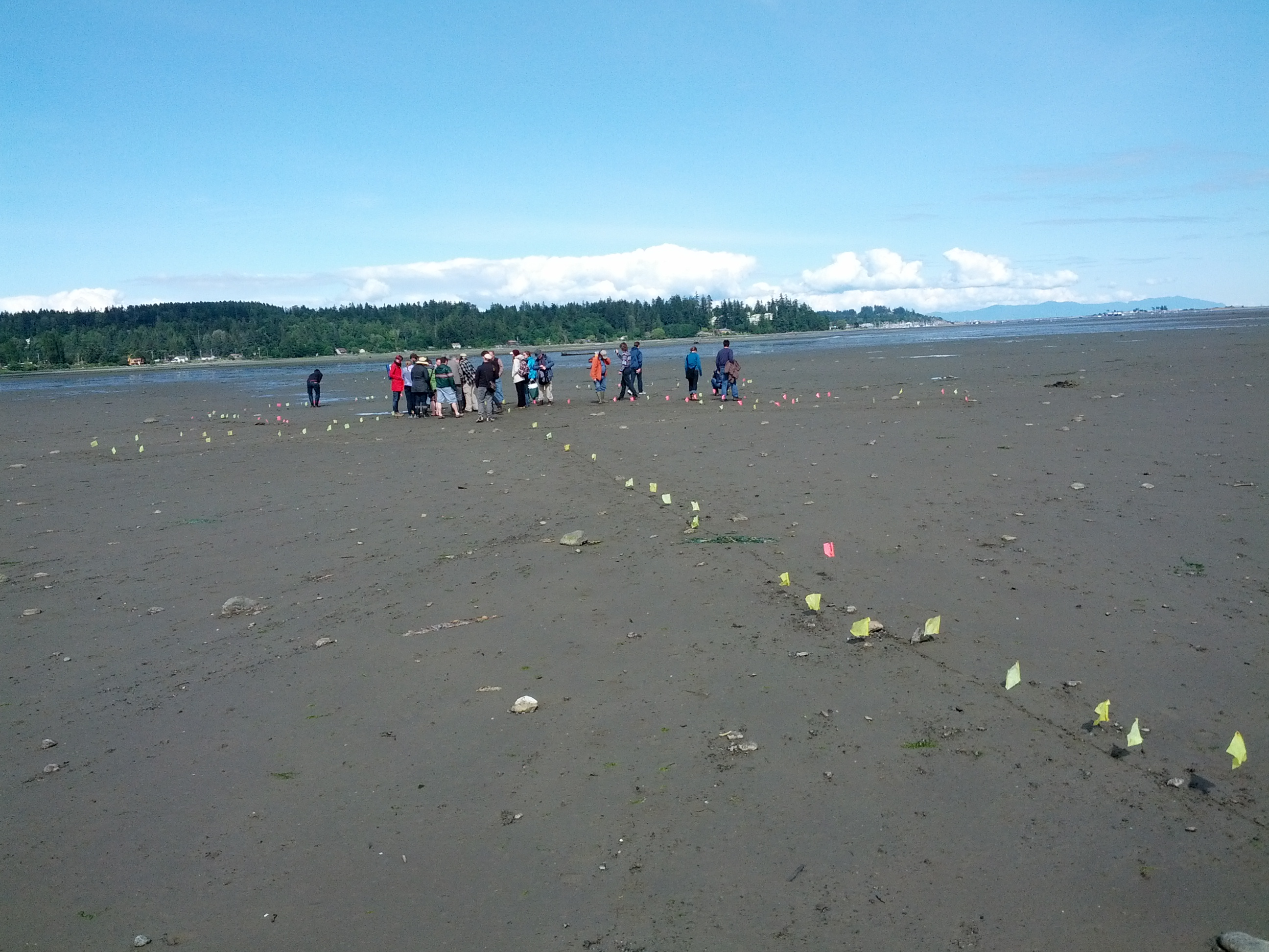 Tour of Comox Estuary intertidal fish trap archaeological site. Source: Sean Kheraj