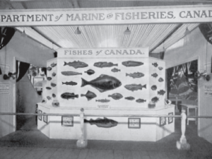 The Dominion Fisheries Museum exhibit at the Canadian National Exhibition 1913, 47th Annual Report of the Department of Marine and Fisheries 1913-14 (Ottawa: 1914)