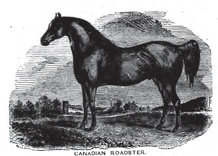 """Canadian Roadster"" from Robert McClure, Diseases of the Horse (1873)"