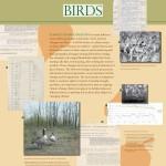 np-birds