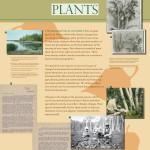 np-plants