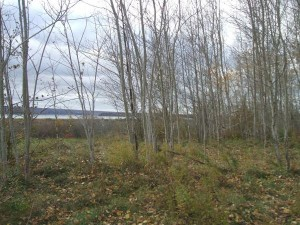 Melanson Settlement, photo: Claire Campbell