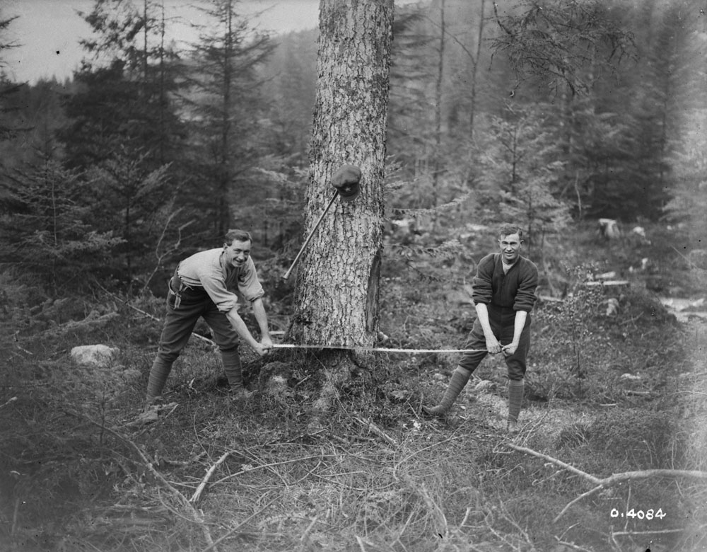 Canadian Forestry Corps Personnel felling a tree. Source: LAC PA-004003