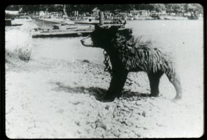 Image 1: This domesticated bear, photographed on Main Duck Island, may be one of five incarnations of Queen's University's mascot: Boo Hoo the bear. The original Boo Hoo was purchased by students in 1922 and kept in the basement of Grant Hall. Osborne Collection.