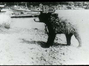 Bear on Main Duck Island, Osborne Collection.