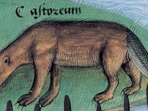 Platearius, Livre des simples médecines, c. 1480.