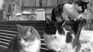 "Source: Yatmandu, ""Parliament Cats,"" https://www.flickr.com/photos/yatmandu/391698641/"