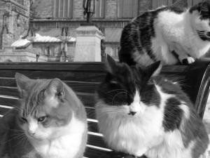 "Source: Yatmandu, ""Parliament Cats,"" https://www.flickr.com/photos/yatmandu/391698641/"