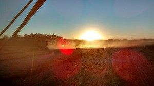 Sunset glows through blowing chaff, near Hardisty, Alberta. Photo: Andrew Marcille.
