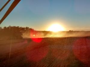 Sunset glows through blowing chaff, near Hardisty, Alberta. Photo: Andrew Marcille.
