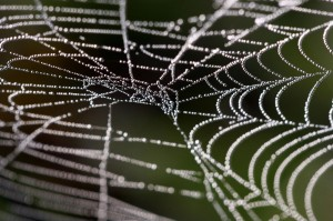 Image : Dew Web by photophilde / ©