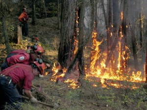 Group of fire fighters from High Country Forest and Fire backburning and clearing forest to prevent the spread of forest fire. Source: Library and Archives Canada, 3603846.