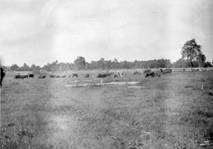 Red Mud Indian Reserve, Carrot River, Saskatchewan, 1907. Source: Library and Archives Canada, 3361249.