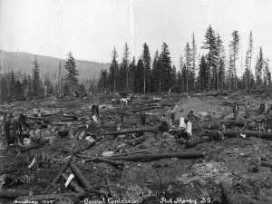 Clearing site for Imperial Oil Refinery, Port Moody, BC, 1914. Source: City of Vancouver Archives.