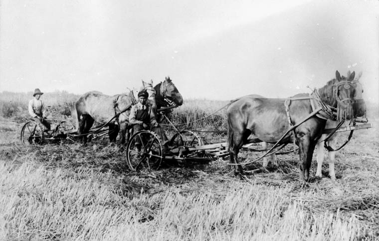 Two boys cutting hay with two teams of horses, St. Michael's Indian Residential School, Duck Lake, Saskatchewan, unknown date. Credit: Library and Archives Canada.