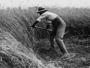 Mowing Hay. Photo credit: http://www.abc.es/cultura/20150312/abci-ganan-origen-insulto-201503112252.html