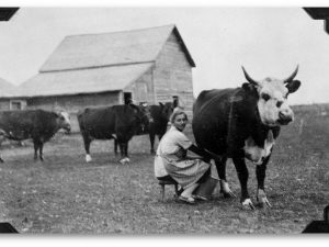 """Farmer girl milking a cow"". Provided by Julie Ruiz, UQTR."