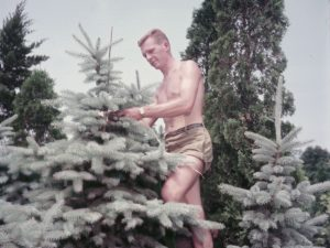 Young shirtless male gardener staking a tree, Niagara, Ontario, MIKAN 4293061, Library and Archives Canada